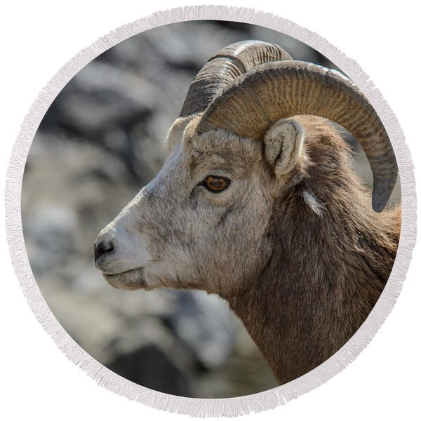 Close Big Horn Sheep  Round Beach Towel