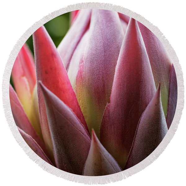 Close Up Of A Pink Tropical Flower Round Beach Towel