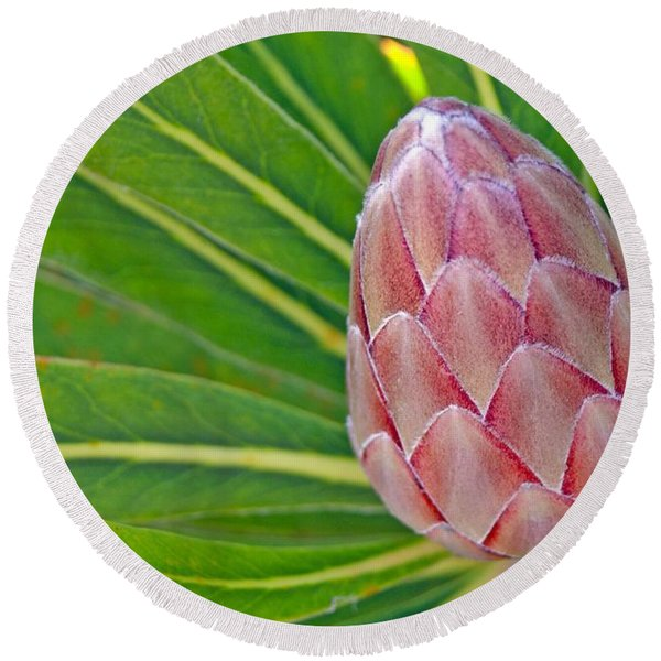 Close Up Of A Protea In Bud Round Beach Towel