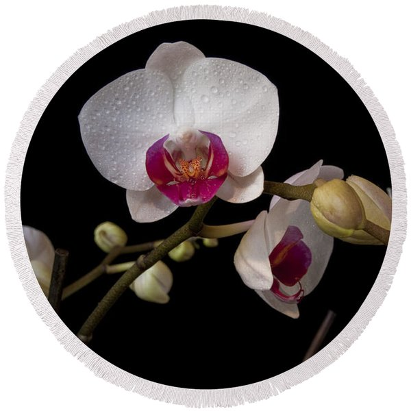 Colorful Moth Orchid Round Beach Towel