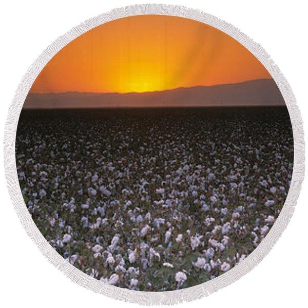 Cotton Crops In A Field, San Joaquin Round Beach Towel