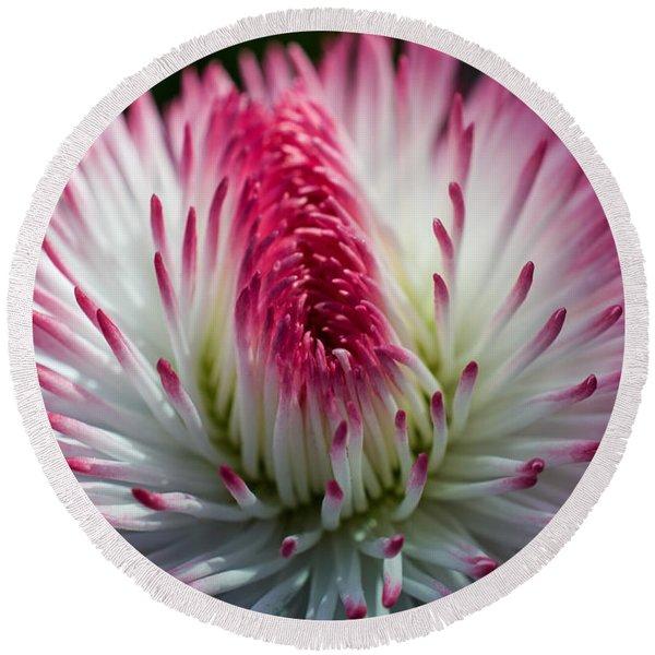 Dark Pink And White Spiky Petals Round Beach Towel