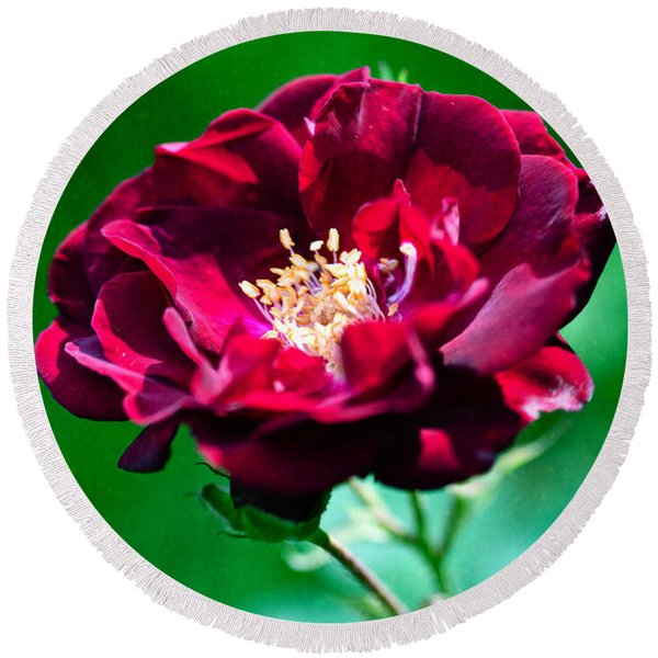 Dark Red Rose Round Beach Towel