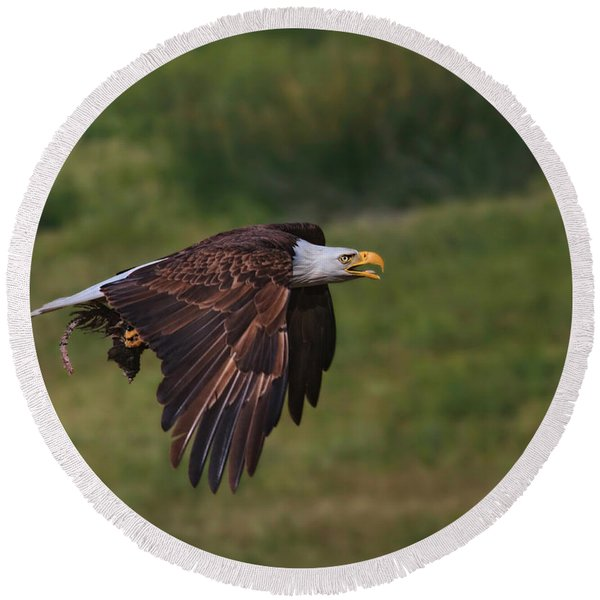 Eagle With Prey Round Beach Towel