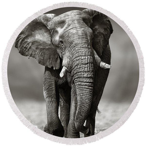 Elephant Approach From The Front Round Beach Towel