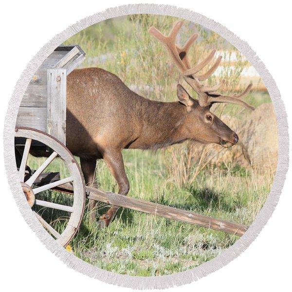 Elk Drawn Carriage Round Beach Towel