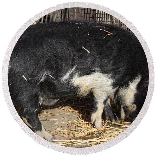 Farm Pig 7d27344 Round Beach Towel