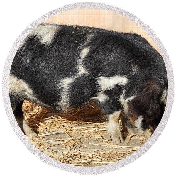 Farm Pig 7d27356 Round Beach Towel