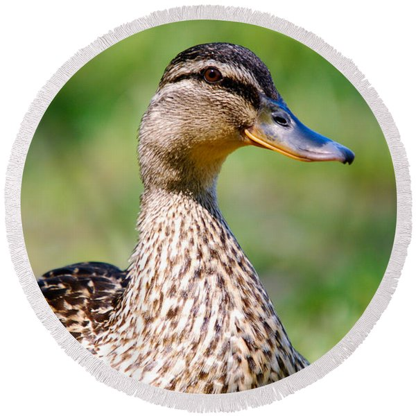 Female Mallard Portrait Round Beach Towel