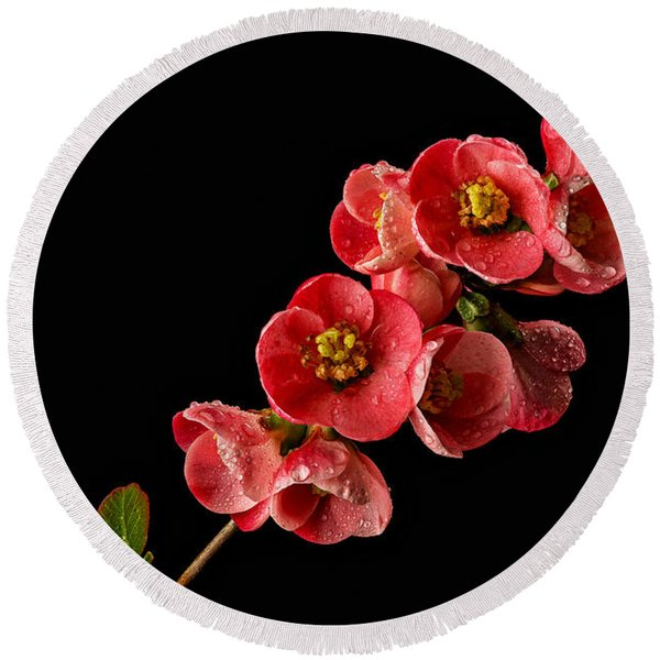 Flowering Quince Round Beach Towel