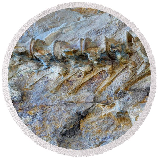 Fossilized Dinosaur Backbone - Dinosaur National National Monument Round Beach Towel
