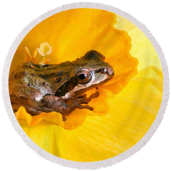 Frog And Daffodil Round Beach Towel