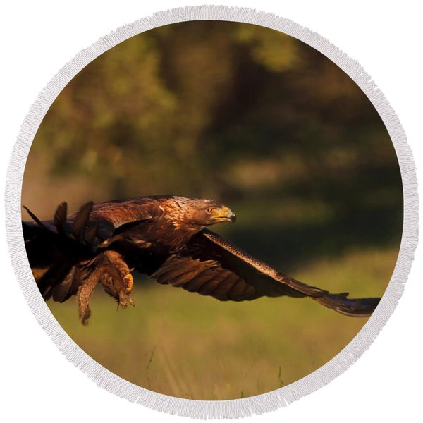 Golden Eagle On The Hunt Round Beach Towel