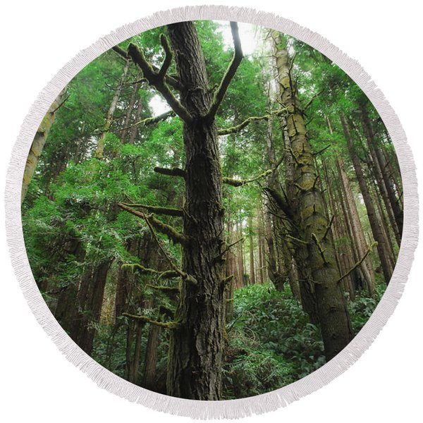 Groovin With The Redwoods Round Beach Towel