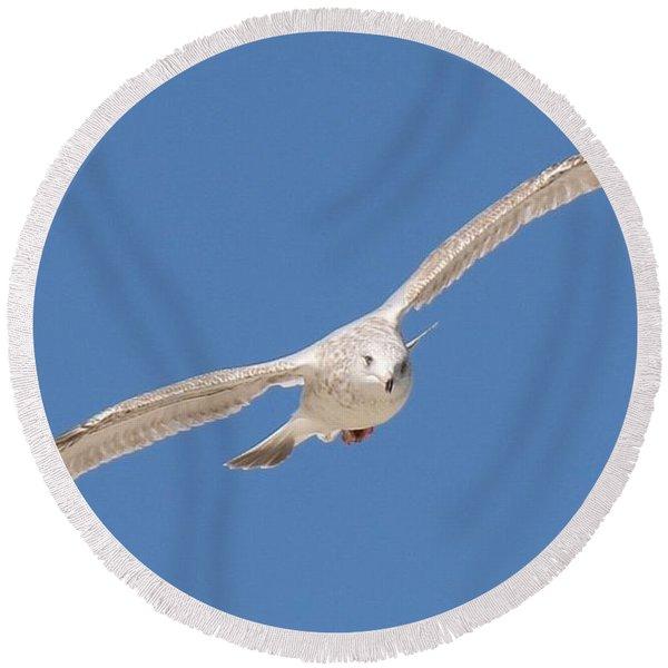 Gull In Flight  Round Beach Towel