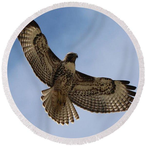 Hawk In Flight  Round Beach Towel