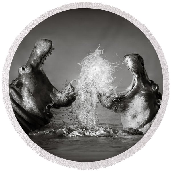 Hippo's Fighting Round Beach Towel
