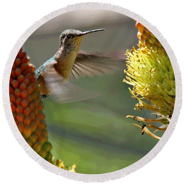 Hummingbird Feeding Round Beach Towel