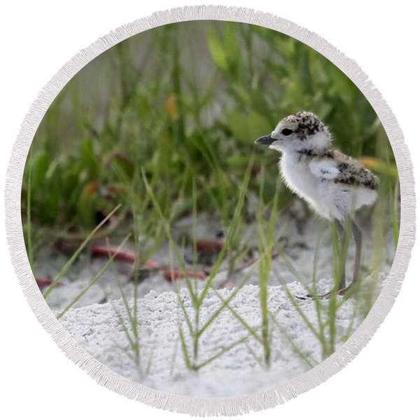 In The Grass - Wilson's Plover Chick Round Beach Towel