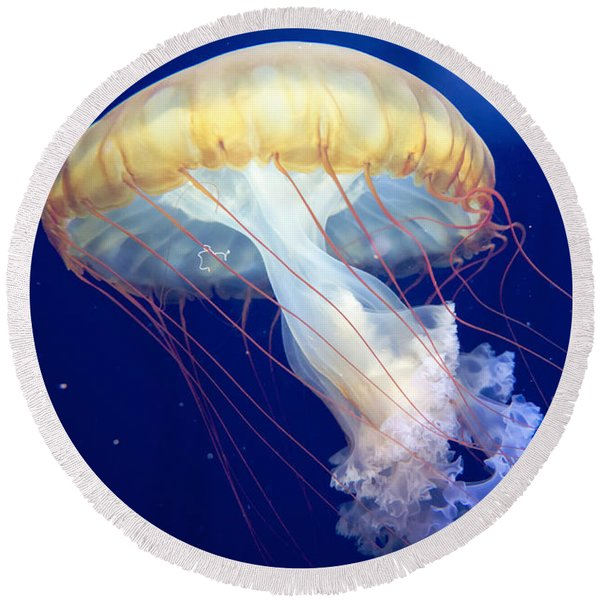 Round Beach Towel featuring the photograph Japanese Sea Nettle Chrysaora Pacifica by Mary Lee Dereske