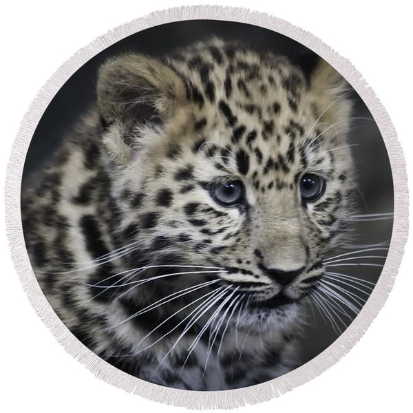 Kanika - Amur Leopard Portrait Round Beach Towel