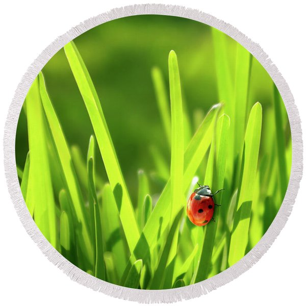 Ladybug In Grass Round Beach Towel