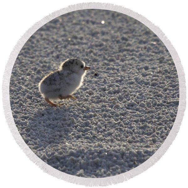 Least Tern Chick Round Beach Towel