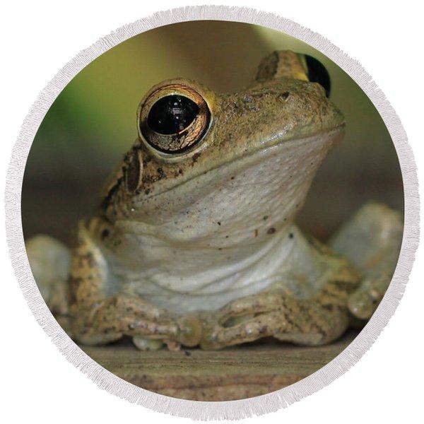Let's Talk - Cuban Treefrog Round Beach Towel