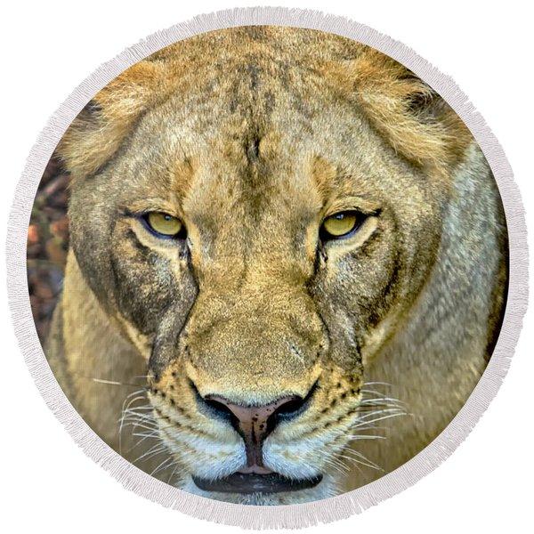 Lion Closeup Round Beach Towel