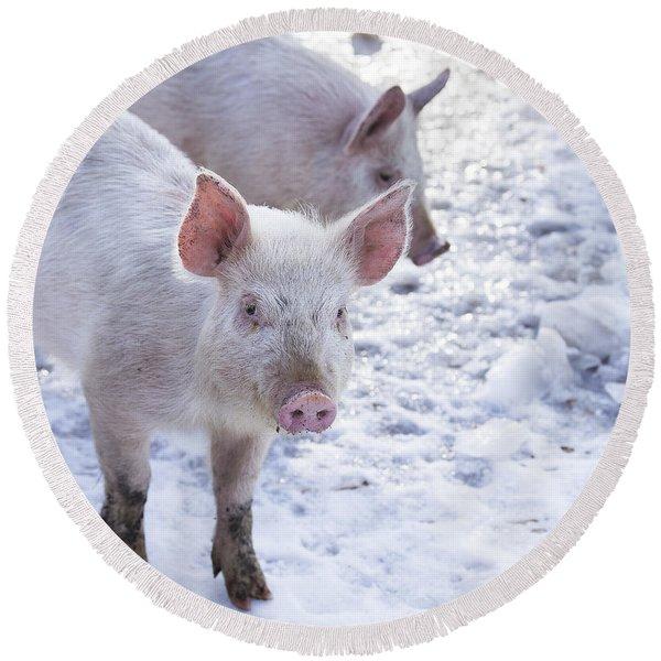 Little Piggies Round Beach Towel