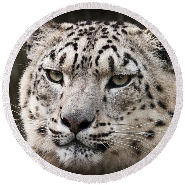 Look Into My Leopard Eyes Round Beach Towel