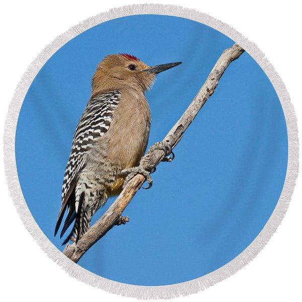 Male Gila Woodpecker Round Beach Towel