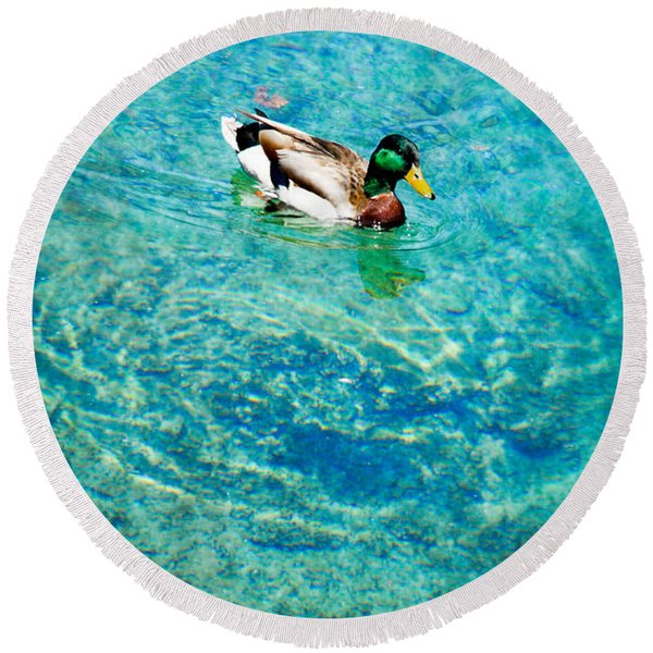 Male Mallard Swimming Round Beach Towel