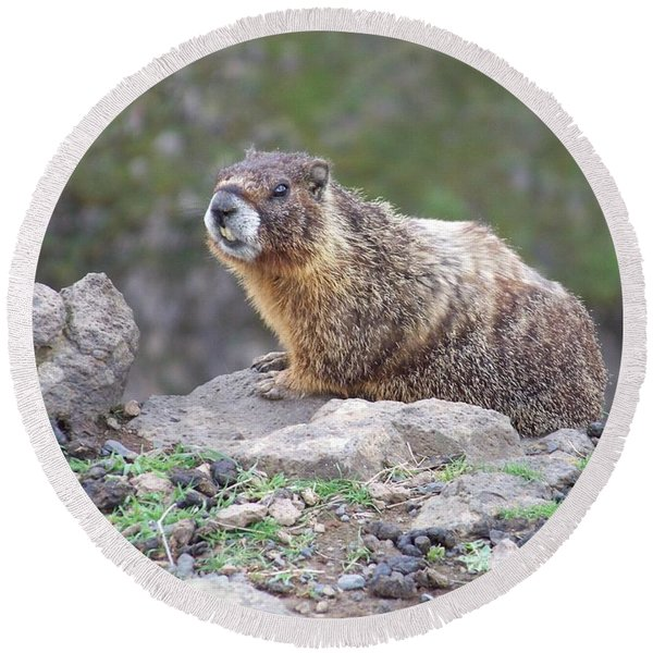 Marmot On The Edge Round Beach Towel