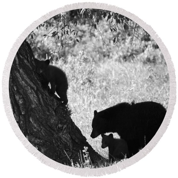 Mother Black Bear With Two Cubs Round Beach Towel