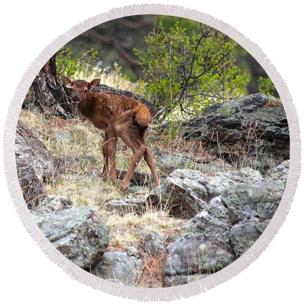 Newborn Elk Calf Round Beach Towel