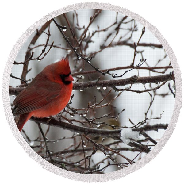 Northern Red Cardinal In Winter Round Beach Towel