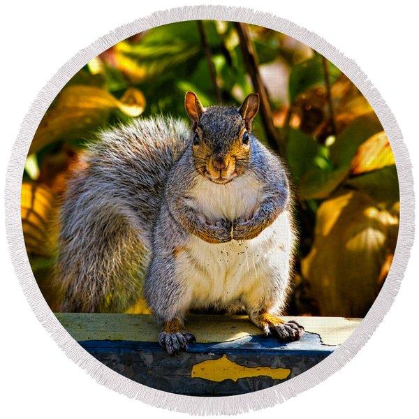 One Gray Squirrel Round Beach Towel