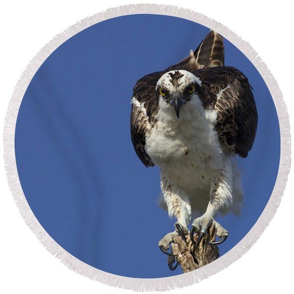 Osprey Photo Round Beach Towel