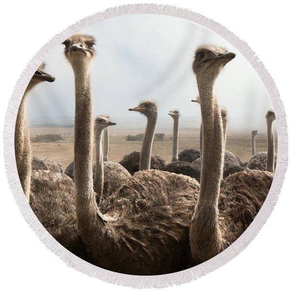 Ostrich Heads Round Beach Towel