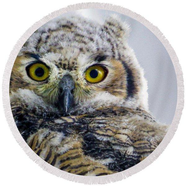 Owlet Close-up Round Beach Towel