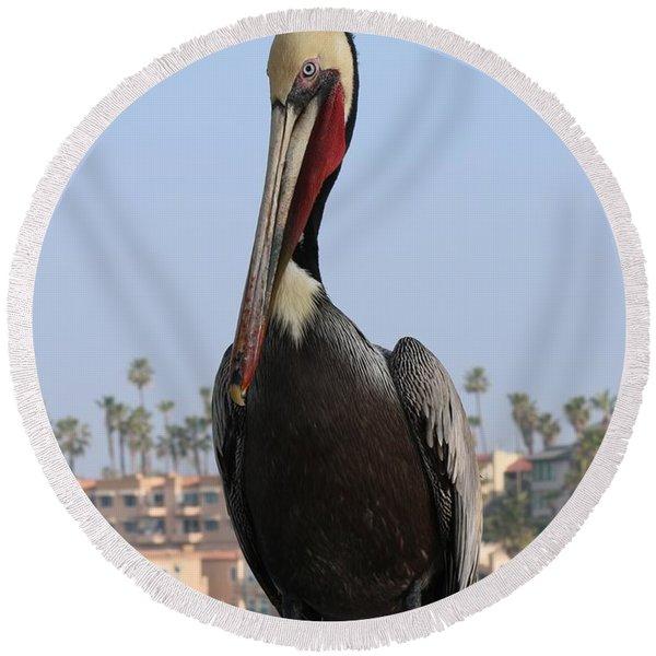 Pelican - 2  Round Beach Towel