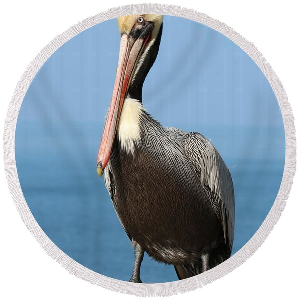 Pelican - 3  Round Beach Towel