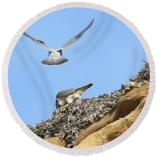 Peregrine Falcons - 2 Round Beach Towel