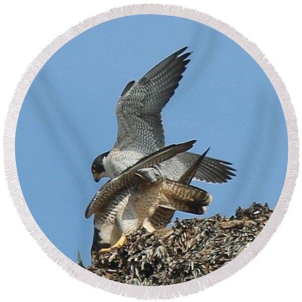 Peregrine Falcons - 4 Round Beach Towel