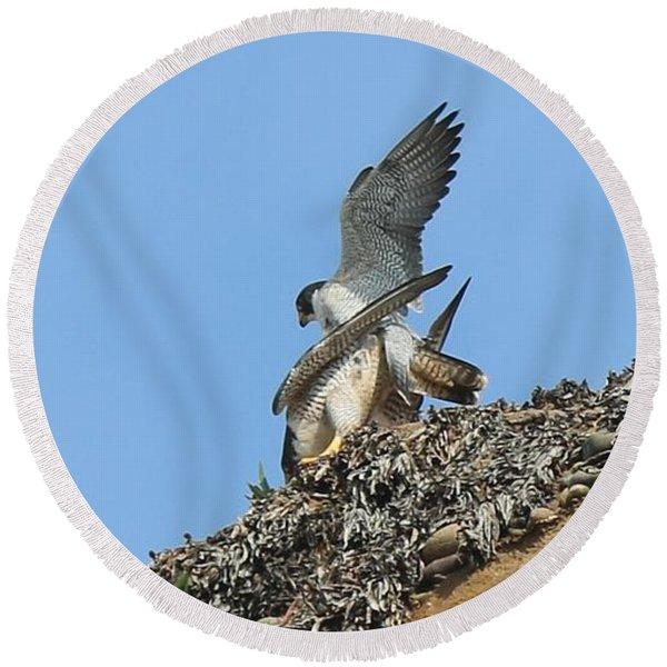 Peregrine Falcons - 5 Round Beach Towel