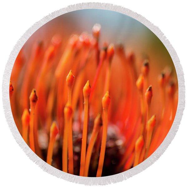 Pincushion Tropical Flower  Maui Round Beach Towel