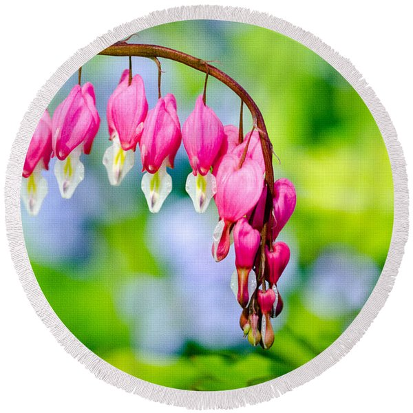 Pink Bleeding Heart Round Beach Towel