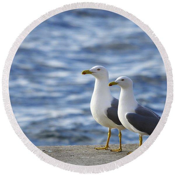 Posing Seagulls Round Beach Towel