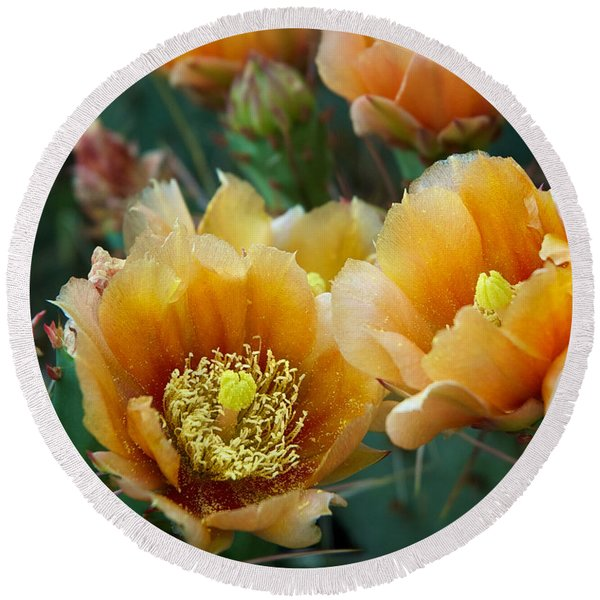 Round Beach Towel featuring the photograph Prickly Pear Cactus by Mary Lee Dereske